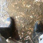 水害のあった岡山にボランティアに行きました